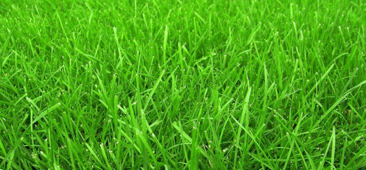 Лужайки и газоны