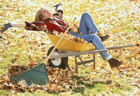 8 самых важных дел в саду и огороде на даче осенью.