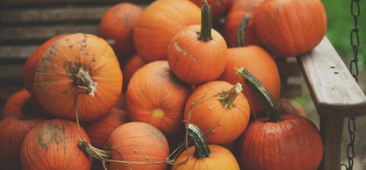 Огород в октябре.