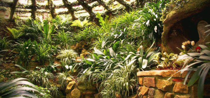 Зимний сад в доме.